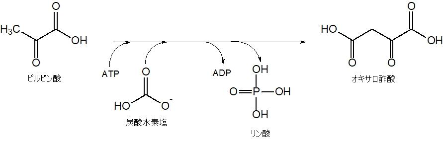 オキサロ酢酸