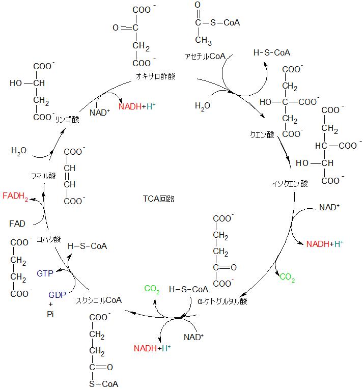 TCA回路構造式