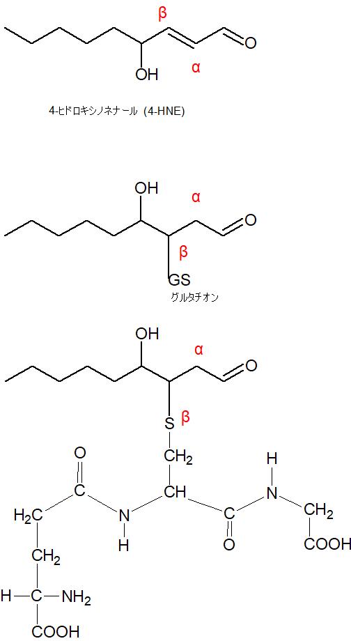 4-ヒドロキシノネナール抱合