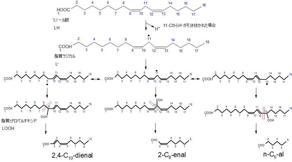 リノール酸の自動酸化