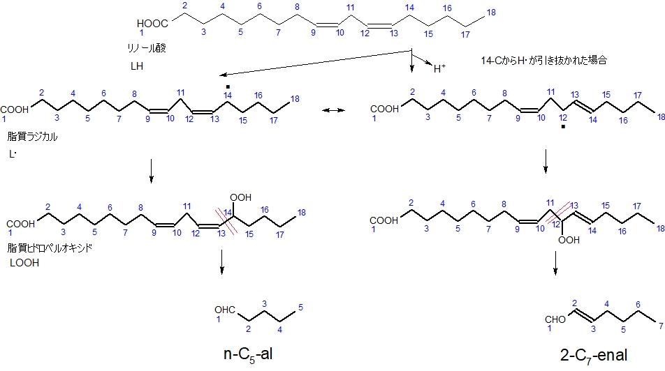 リノール酸の自動酸化2