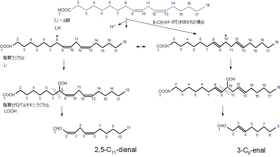 リノール酸の自動酸化3