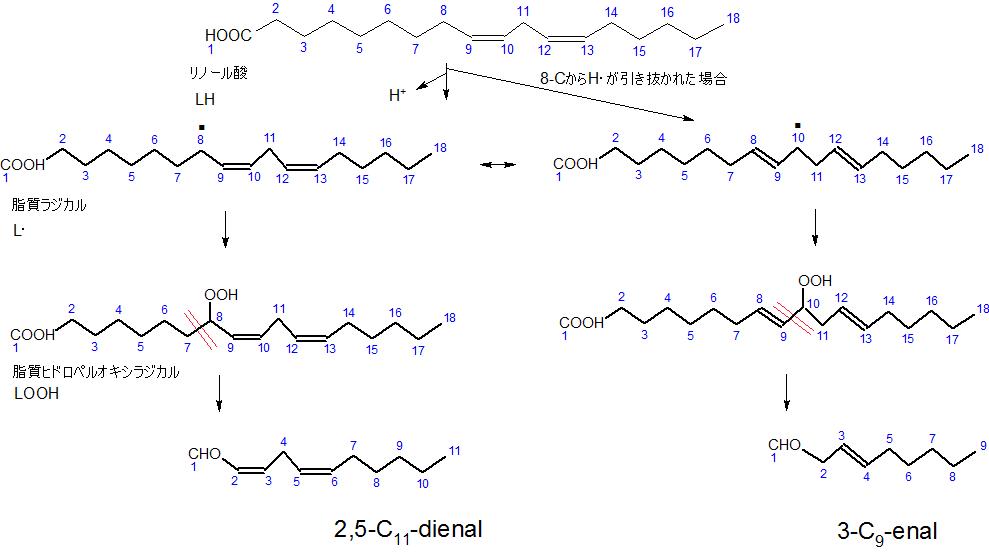 リノール酸の酸化