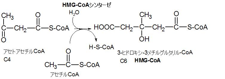 HMG-CoA