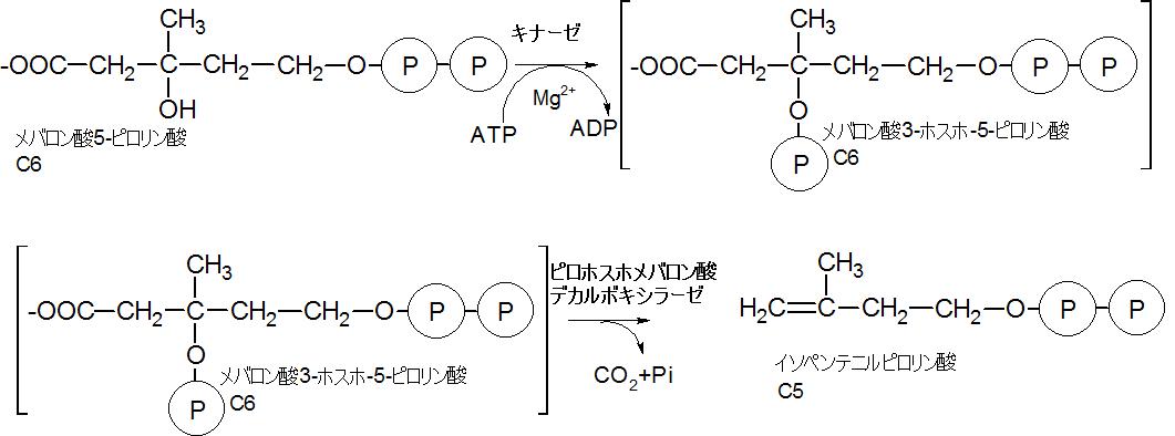 イソペンテニルピロリン酸