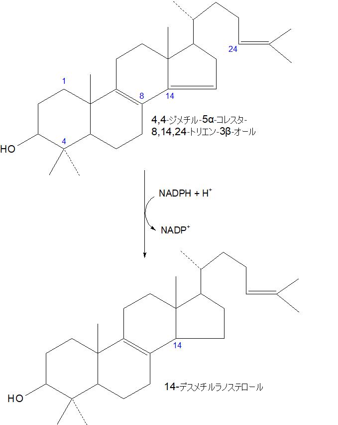 14-デスメチルラノステロール