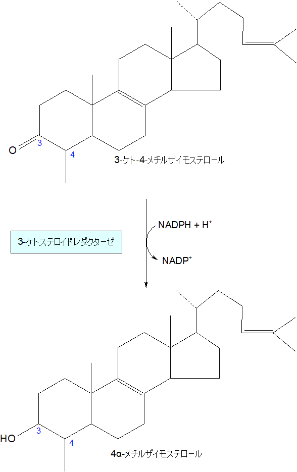 4α-メチルザイモステロール