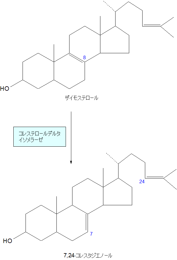 7,24-コレスタジエノール