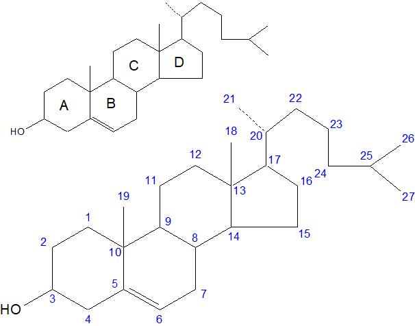 コレステロール炭素番号