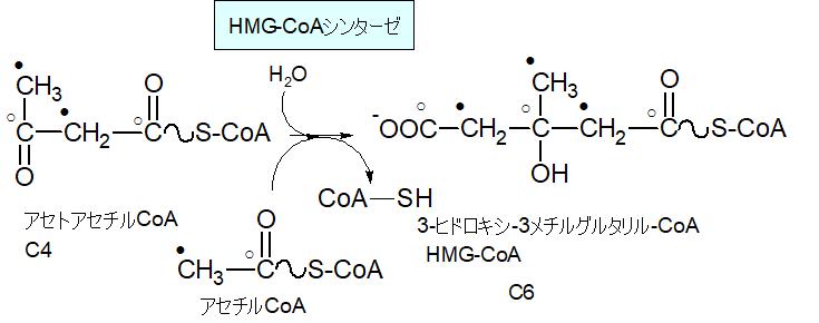 3-ヒドロキシ-3-メチルグルタリルCoA