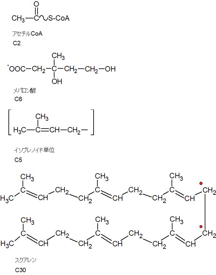 イソプレノイド単位とスクアレン