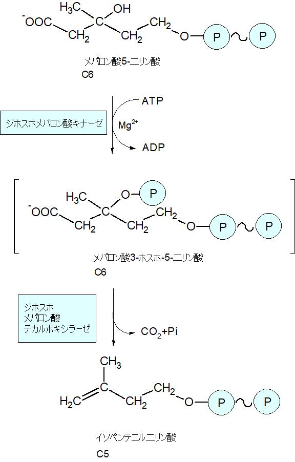 イソペンテニル二リン酸