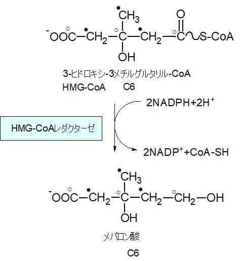 メバロン酸