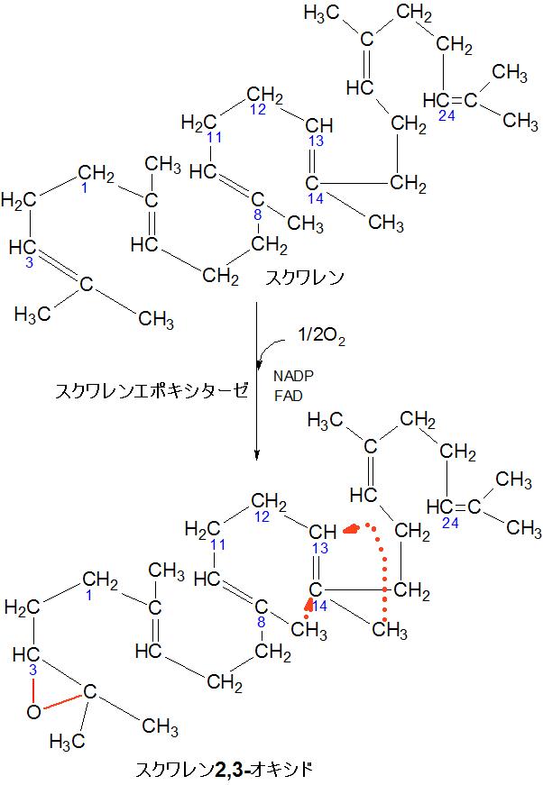 スクワレン2,3-オキシド