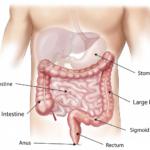 コレステロールはそのままもしくは胆汁酸(塩)として胆汁で体から排泄される