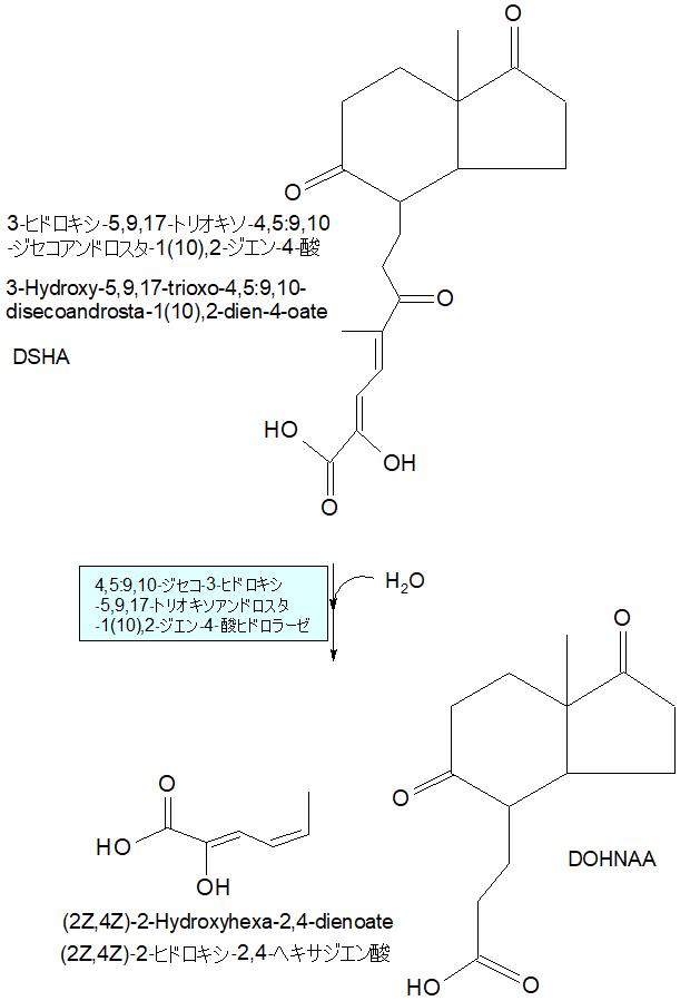 (2Z,4Z)‐2‐ヒドロキシ‐2,4‐ヘキサジエン酸