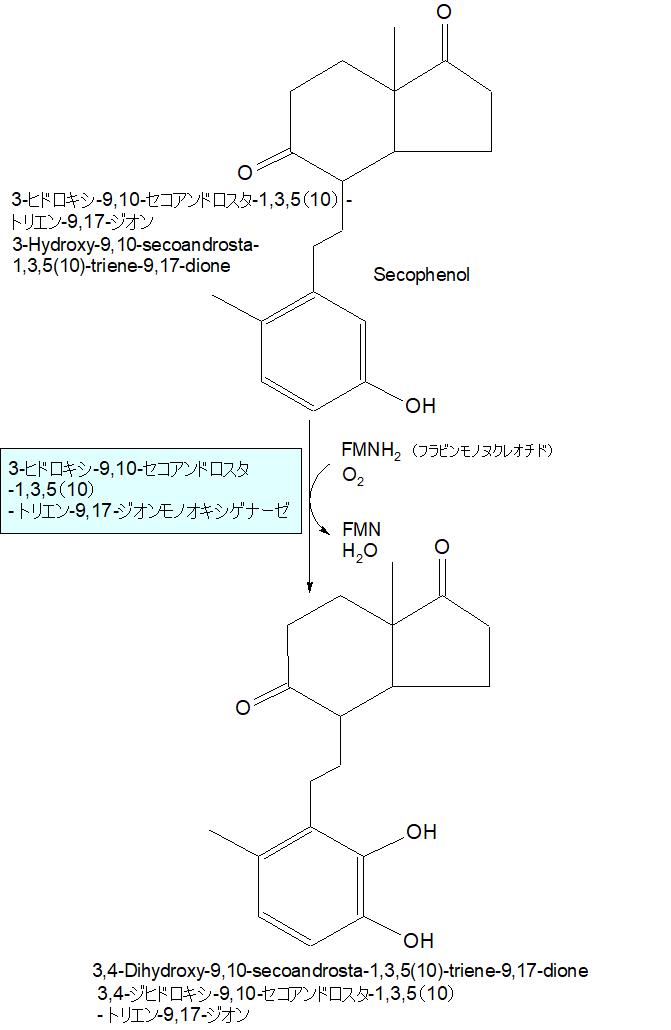 3,4-ジヒドロキシ-9,10-セコアンドロスタ-1,3,5(10)-トリエン-9,17-ジオン