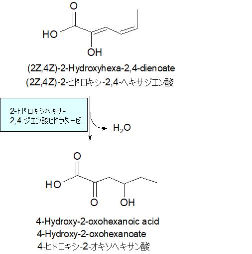 4‐ヒドロキシ‐2‐オキソヘキサン酸