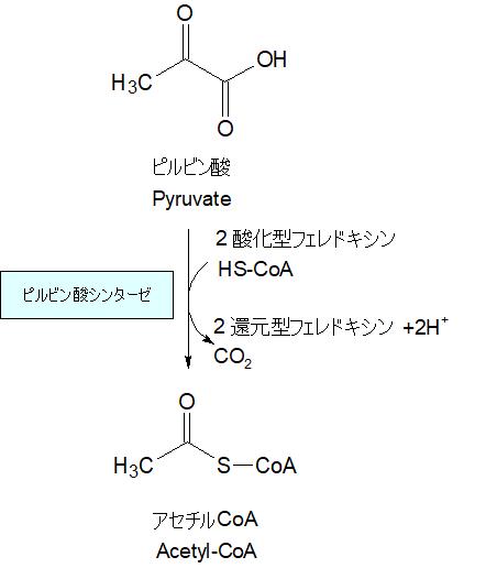 ピルビン酸からアセチルCoA