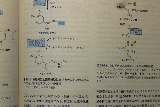 ハーパー生化学
