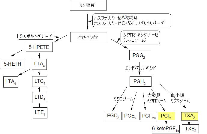 アラキドン酸カスケード