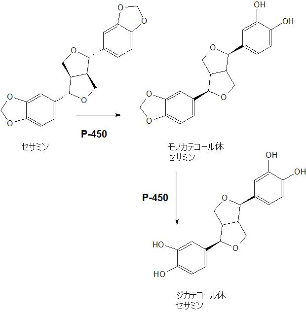 セサミン代謝
