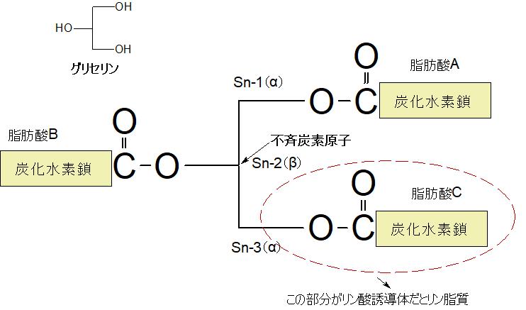 TGの構造