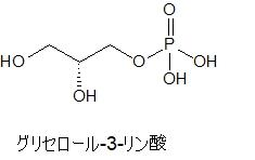 グリセロール-3-リン酸