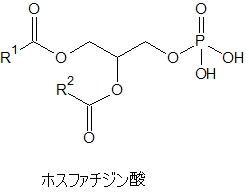 ホスファチジン酸