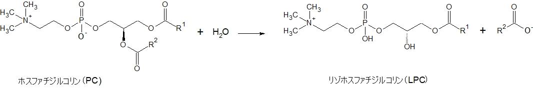 ホスホリパーゼA2